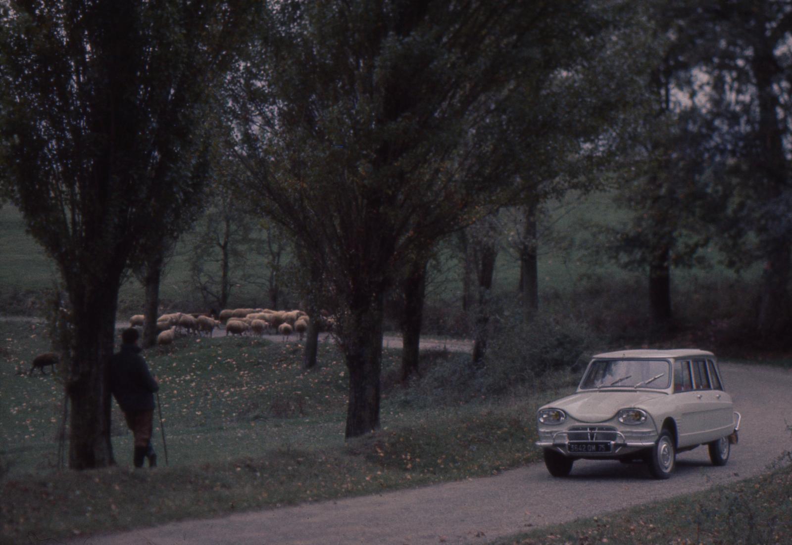 AMI 6 Break 1964 et moutons